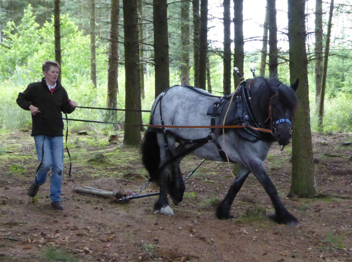 Horse logger