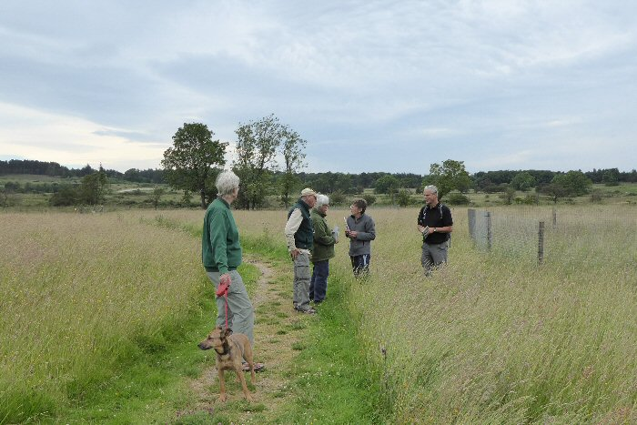 Looking at grasses on the middle moor