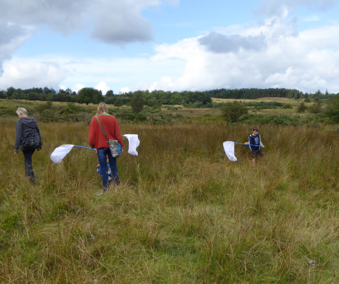 Sweep netting on the moor