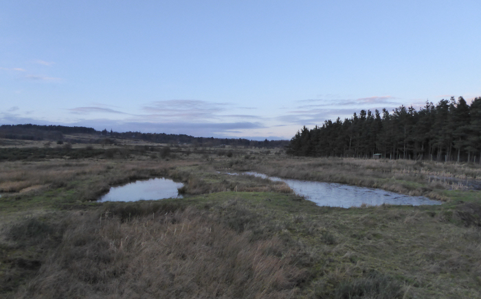 View from the wetland hide