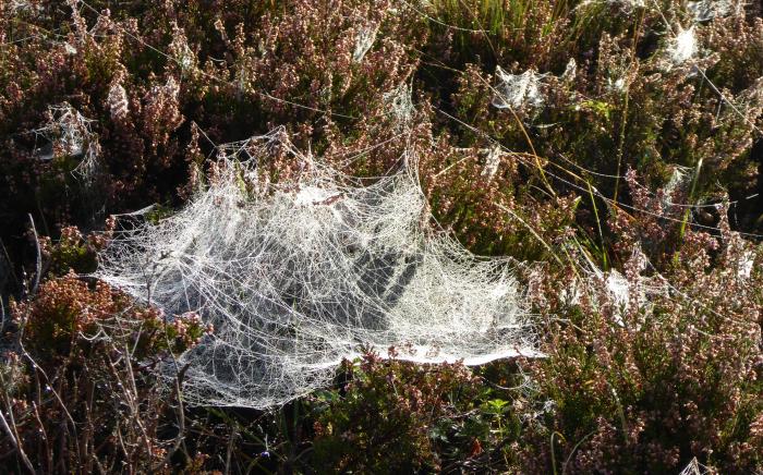 A 3D web
