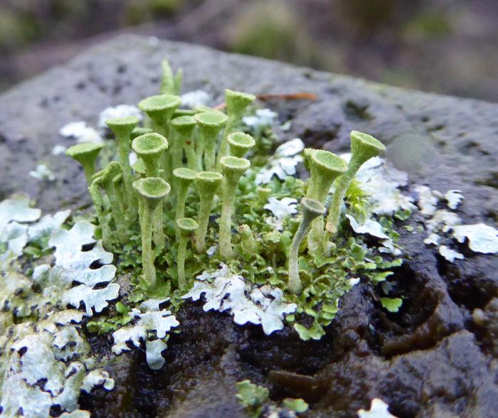 Lichen on wooden post