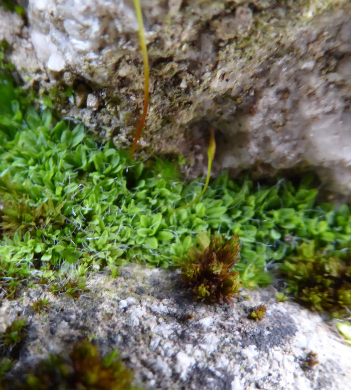 Unknown plant on dry stone wall