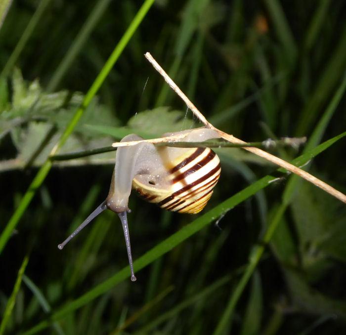Balancing snail