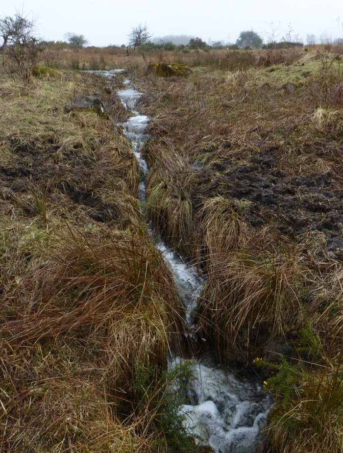 Stream on the moor