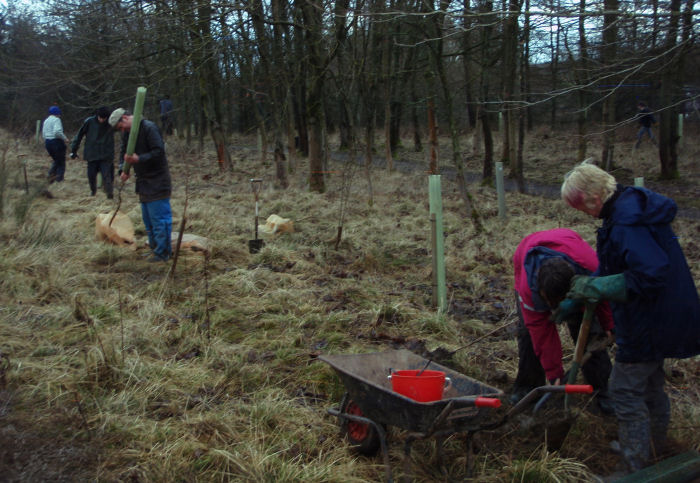 Replanting Tree Group