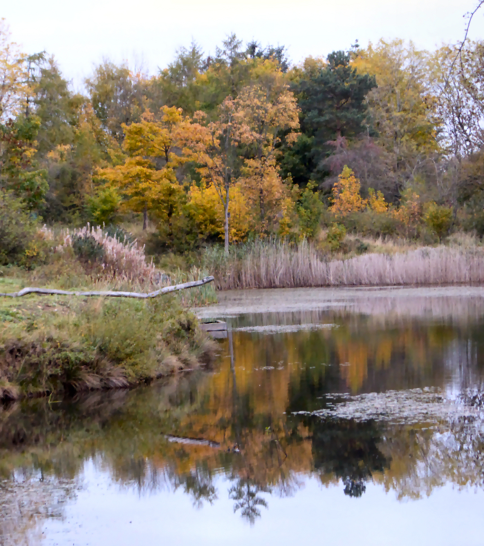 Autumn colours at the lake and the reflections