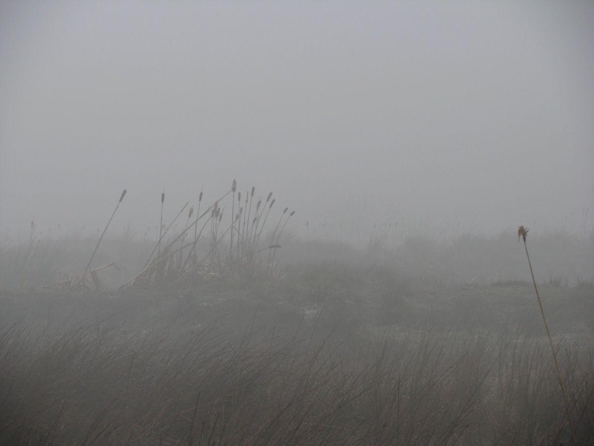 Mist on moor